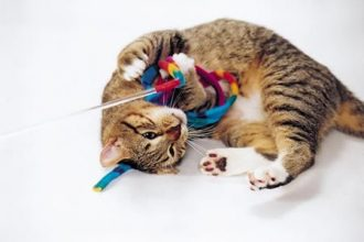 cat playing with string colorful