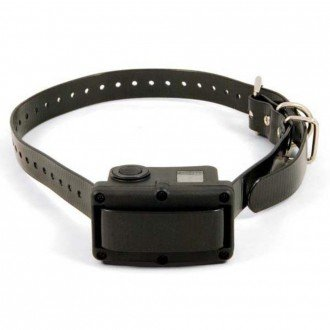 bark collar black with buckles