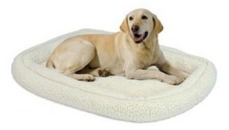 lab on comfy white bed