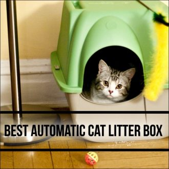 green box with cat