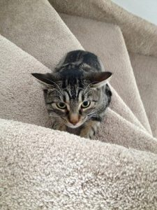 kitty stares upwards at stairs