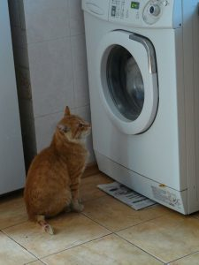 cat staring at washing machine