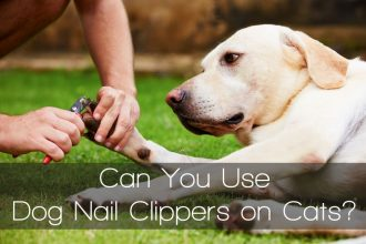 labrador cut nails owner grass