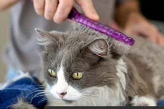 THE 10 BEST PET GROOMING BRUSHES FOR ALL DOGS AND CATS
