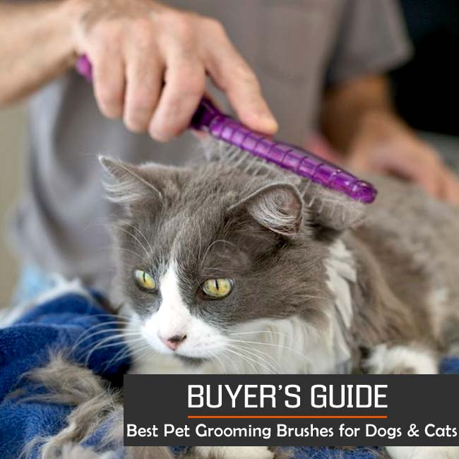 The 10 Best Pet Grooming Brushes For All Dogs And Cats 2019