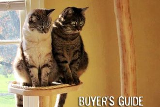best cat trees and scratching posts