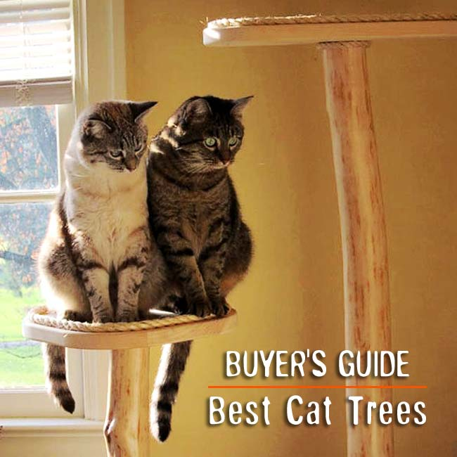 Best Cat Trees And Scratching Posts Reviews Top 10 2016