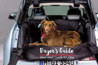 Best Dog Seat Cover For Cars and Trucks