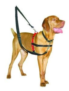 haiti_training_harness
