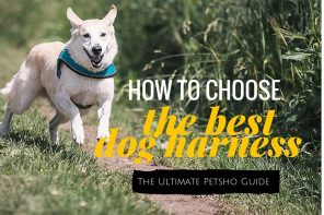 How To Choose The Best Dog Harness: Top 10 Reviews
