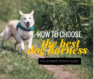 how to choose the best dog harness
