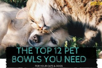 Best Pet Bowls For Cats and Dogs