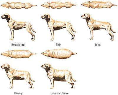 dog weight chart
