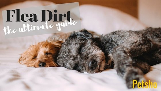 What Is Flea Dirt And What Does It Look Like
