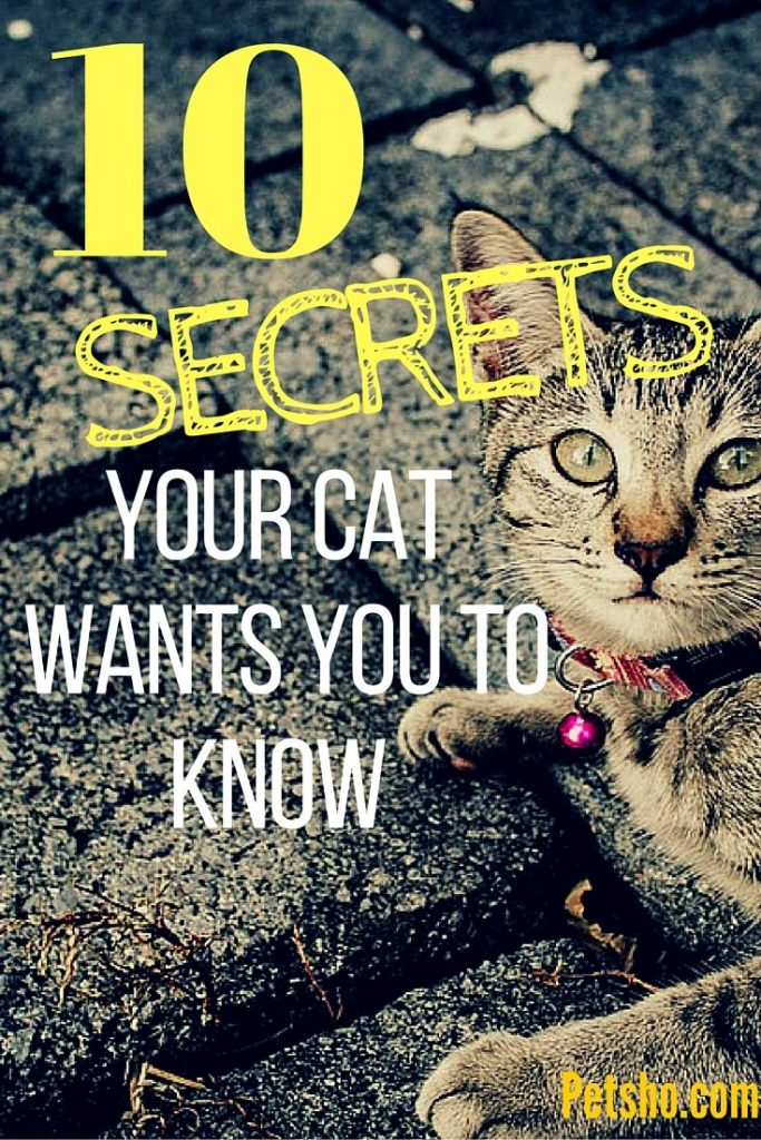 10 secrets your cat wants you to know