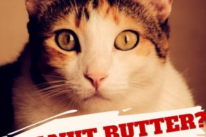 Can Cats Eat Peanut Butter? 4 Things You Need To Know