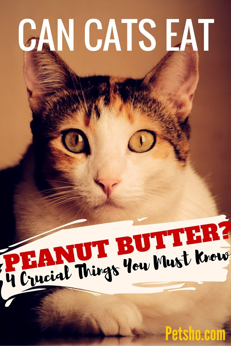 Can Cats Eat Peanut Butter? 4 Things You Need To Know - Pet Blog ...
