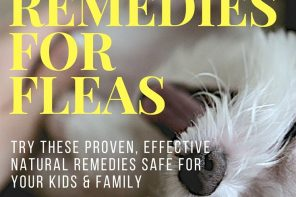 Home Remedies For Fleas You Have To Try