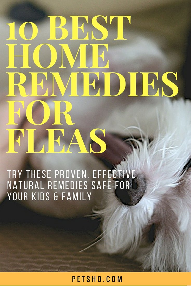 home remedies for fleas you have to try pet blog for dog cat parents. Black Bedroom Furniture Sets. Home Design Ideas