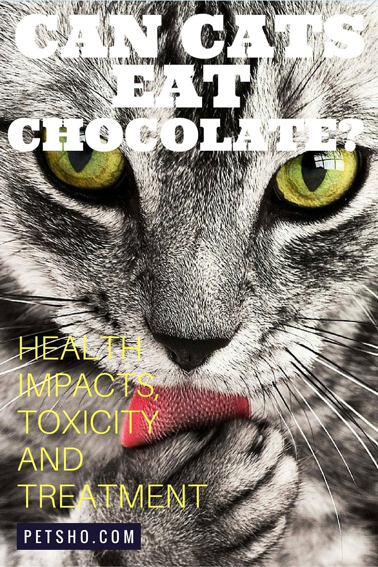 Can Cats Eat Chocolate A Quick Guide To The Health Impacts