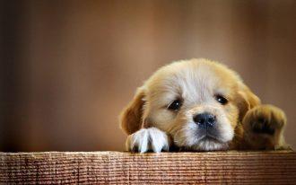 sad pup paws