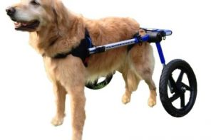 Top 5 Best Doggy Wheelchairs You Need To Check Out