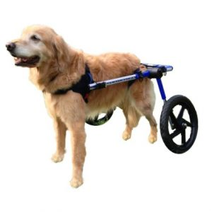 best doggy wheelchair