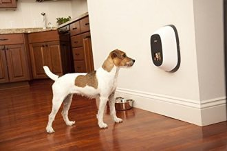 best pet cameras reviews
