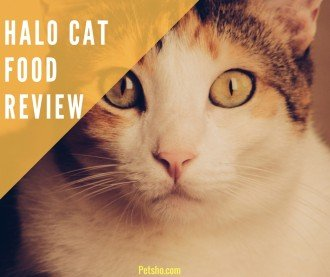 halo cat food review