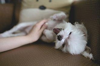 dog rash on belly