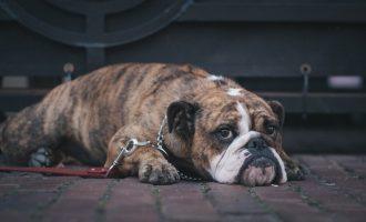 dog upset stomach