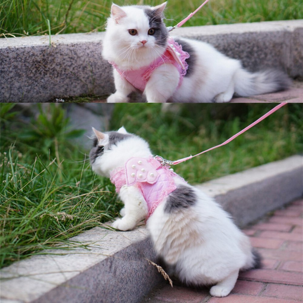 5 Best Cat Harness Reviews 2017