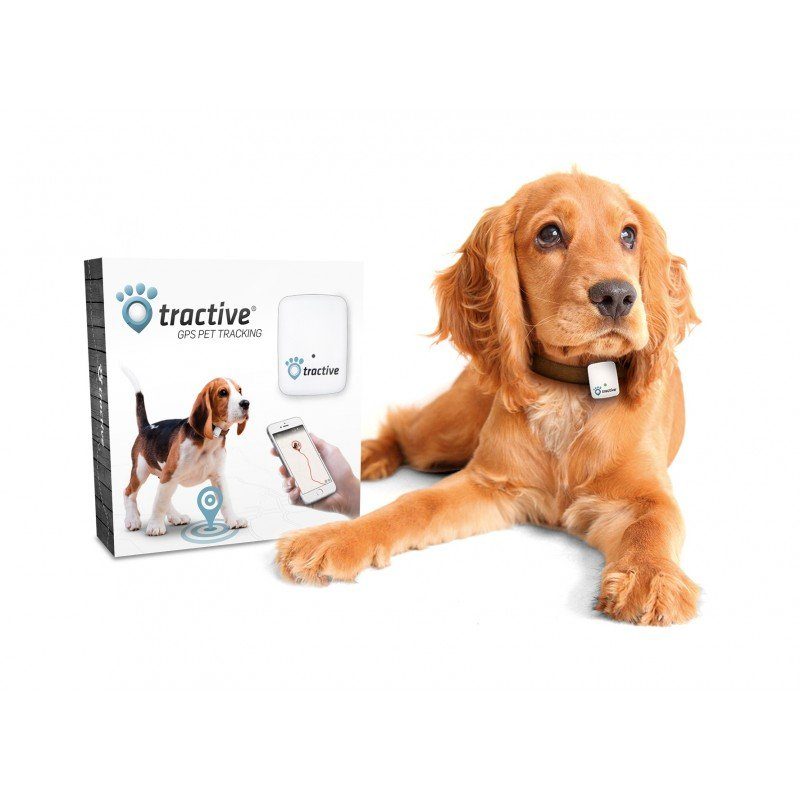 6 Of The Top Rated Dog Gps Trackers 2019 Petsho Reviews
