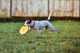 best-frisbee-for-dogs