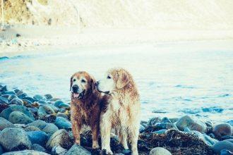 best-loyal-dog