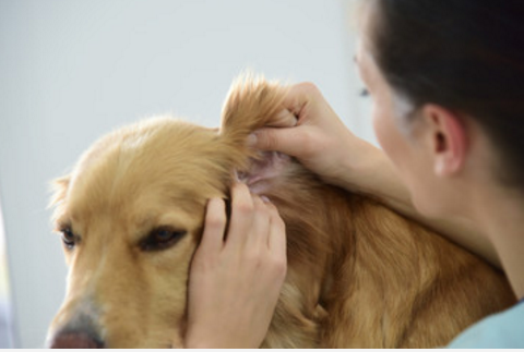 7 Best Dog Ear Cleaners That Actually Work