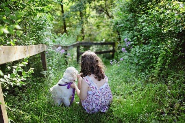 pet-insurance-review