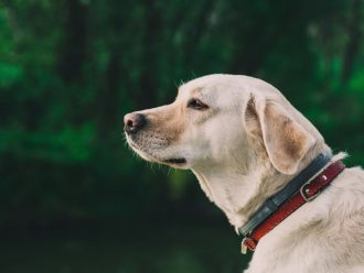 Therapy Dogs for Anxiety