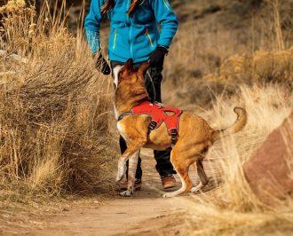 ruffwear web master harness dog review