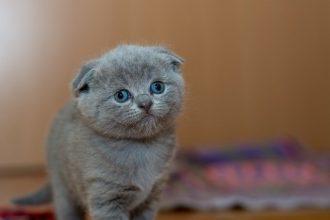 Low Phosphorus Cat Food