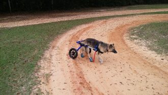 disabled dog caring tips