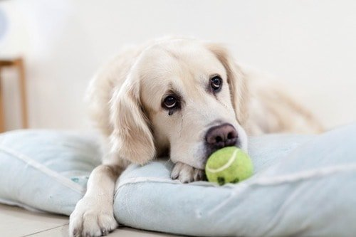 Tumeric For Dogs: What You Should Know