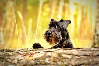 Ways To Tell If Your Dog Has Fleas