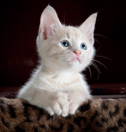 Cat Peeing On Itself