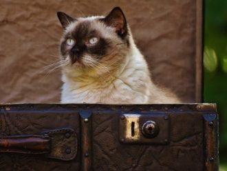 kitty box