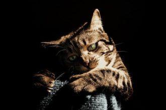 muzzling a cat