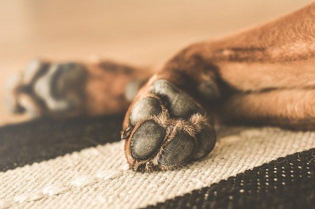 carpal dog paw injury