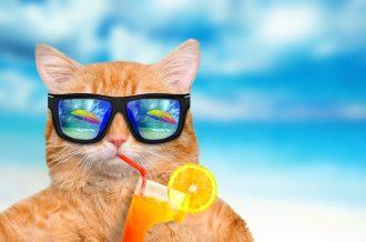 feline water