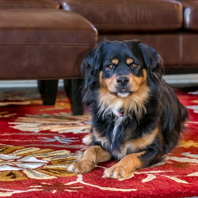 Creative Ways You Can Stop Your Dog From Scratching Out