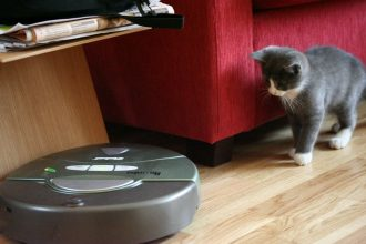 kitty stares at round robot vacuum
